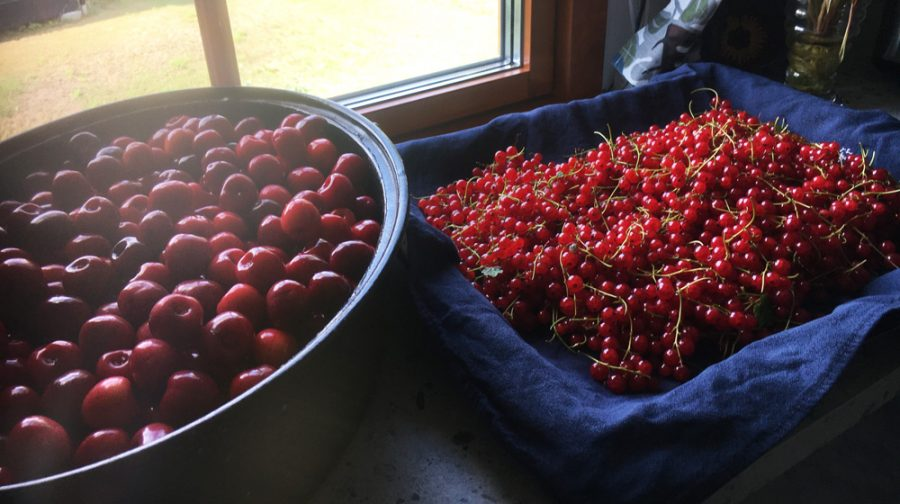 Picked berries in two bowls by a window.