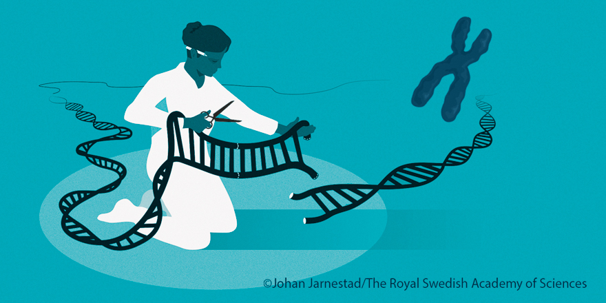 Illustration of the genetic scissors.  Picture of woman cutting in a DNA strand.