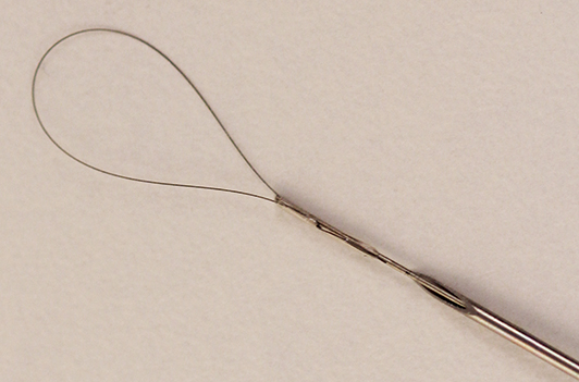 The loop brush sticking out of the end of a needle