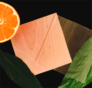 Image of transparent wood with a slice of orange