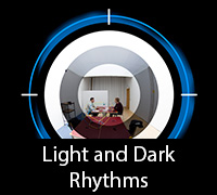 Light and Dark Rhythms