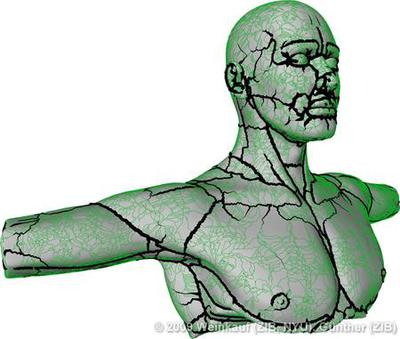 Torso with extremal curvature lines